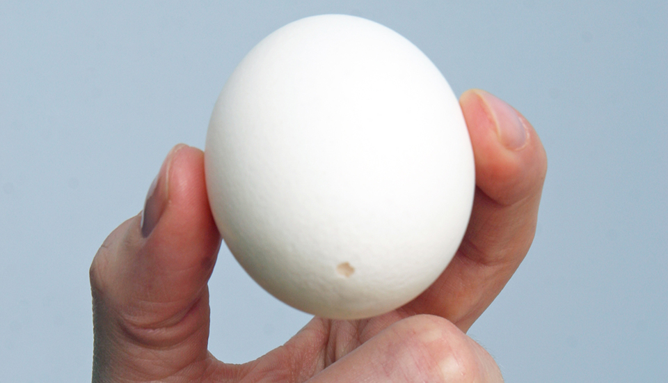 Hollowed egg