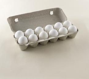 egg carton white