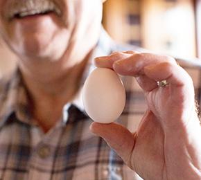 egg farmer egg