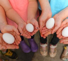 eggs hands