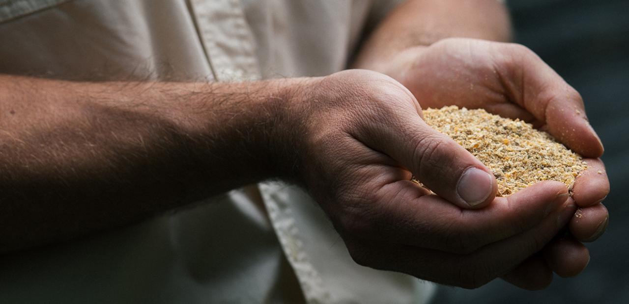 Qu est ce que les producteurs d ufs donnent manger for Qu est ce que mange une poule