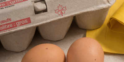 Grade A egg symbol on carton web