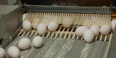NS Newcombe eggs through brush 2