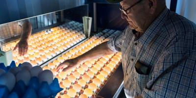 What is egg grading station3