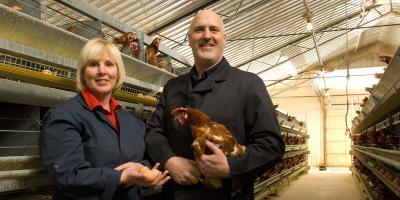 farmer hens